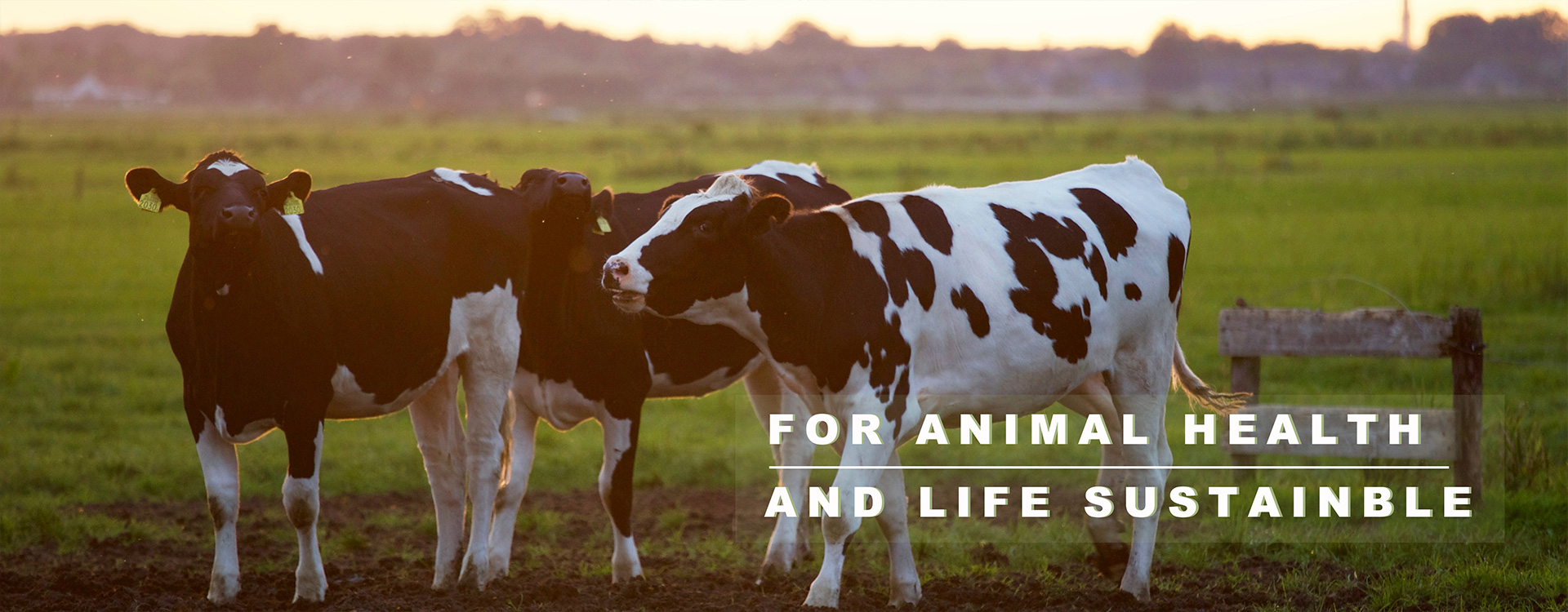 For Animal Health and Life Sustainble